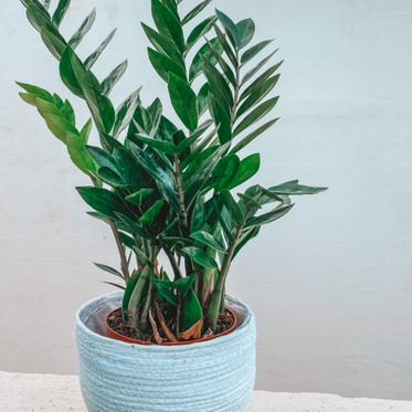 5 super easy tips to keeping your plants alive - and thriving