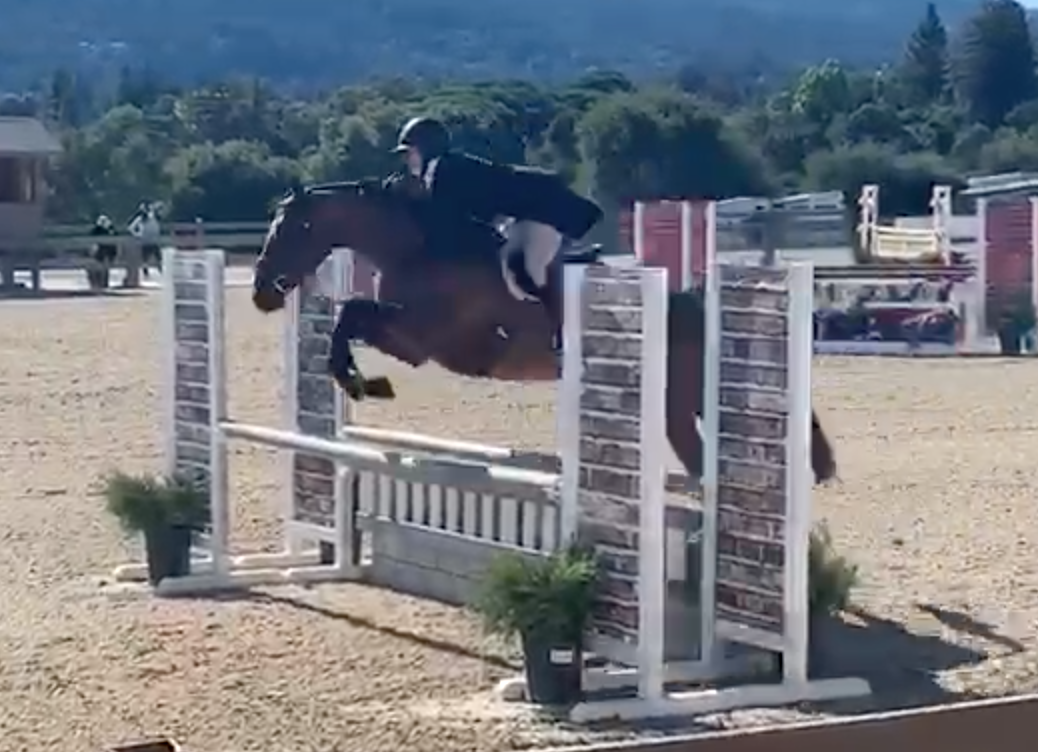 Bijou junior hunter - Leased in 2020