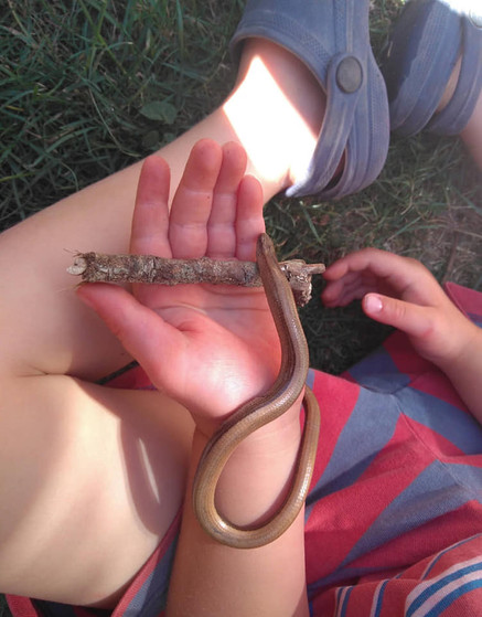 Discovering slow worms