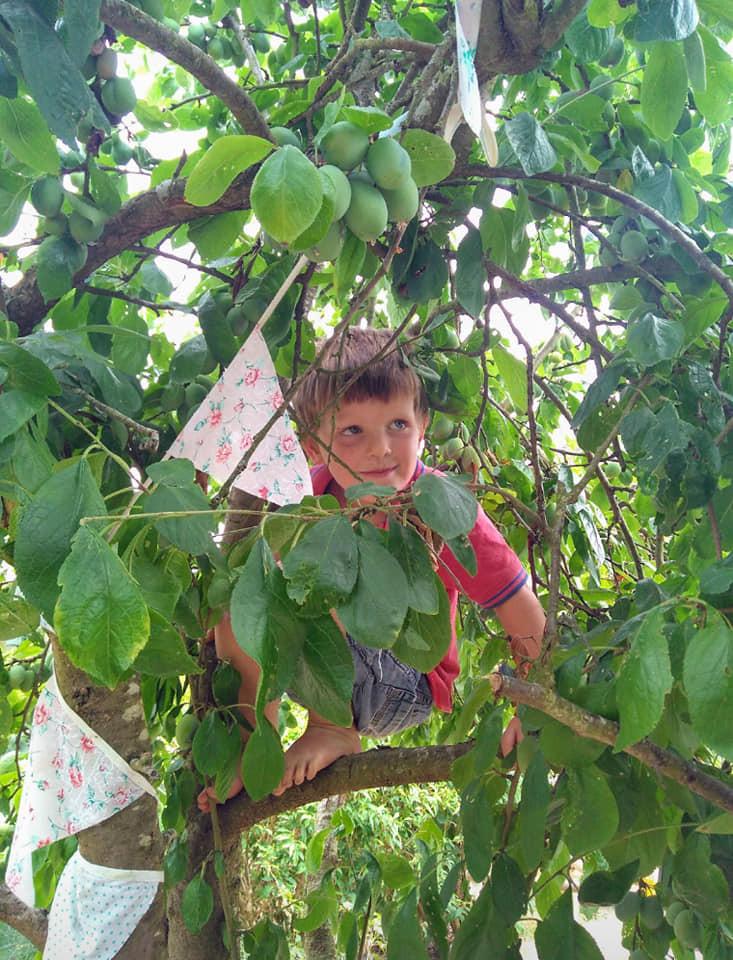 Climbing in the plum tree