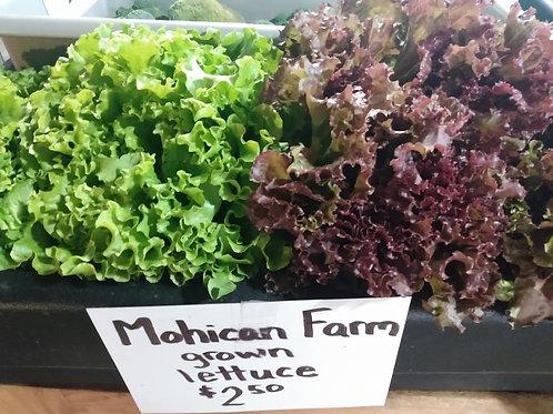 Mohican Farm Romaine
