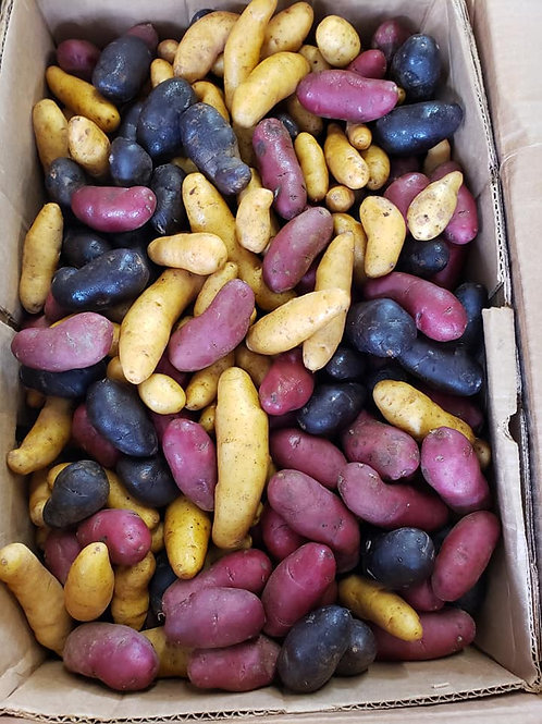 Fingerling Potatoes - Red, White and Blue