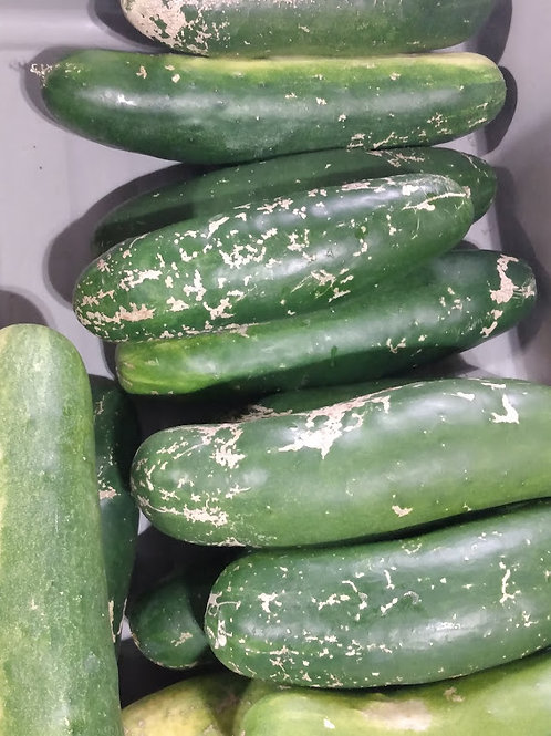 Mohican Farms Cucumbers