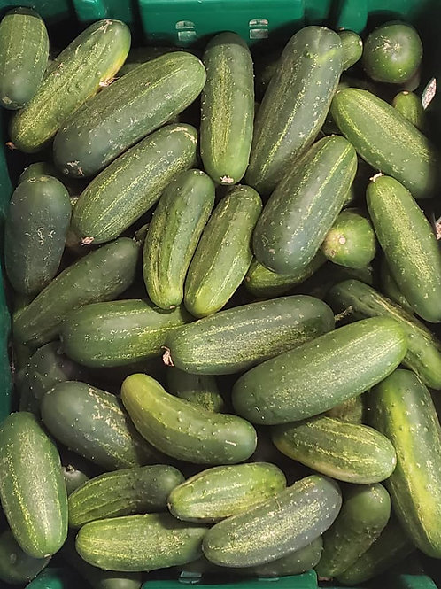 Mohican Farms Pickling Cucumbers
