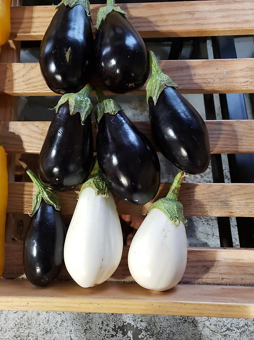 Mohican Farms Eggplant