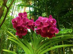 Improves Flowering