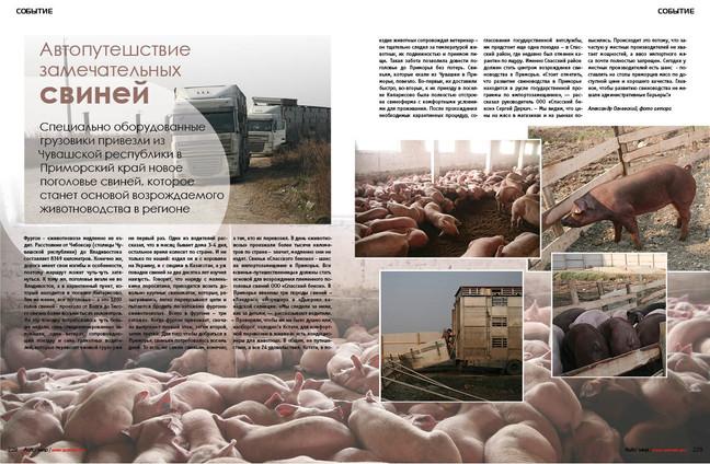 Завезено новое поголовье свиней из Чувашской Республики. Исключительно за счет собственных средств у