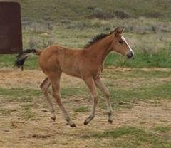 Suzan Billingsley 2020 Lt foal.jpg