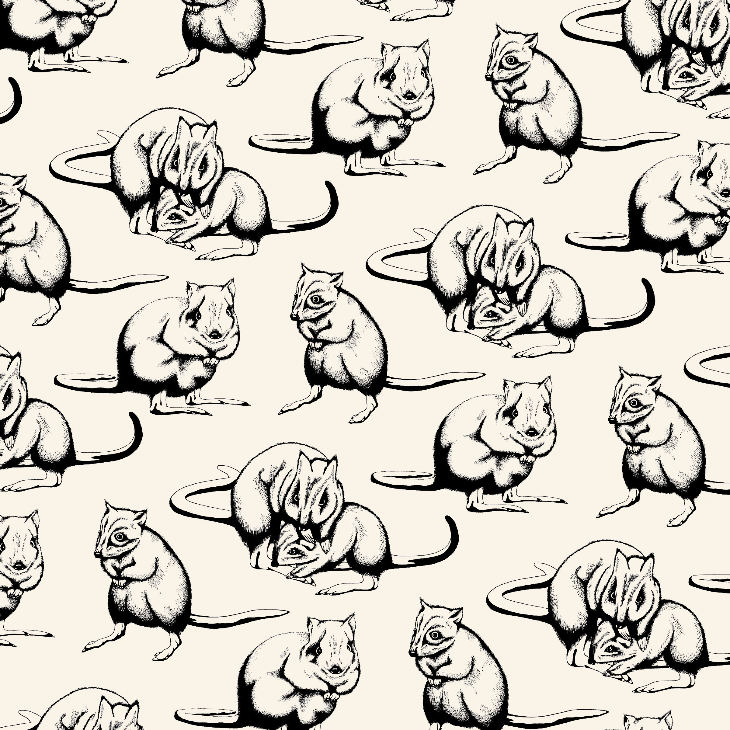 Brush-Tailed Bettong Pattern