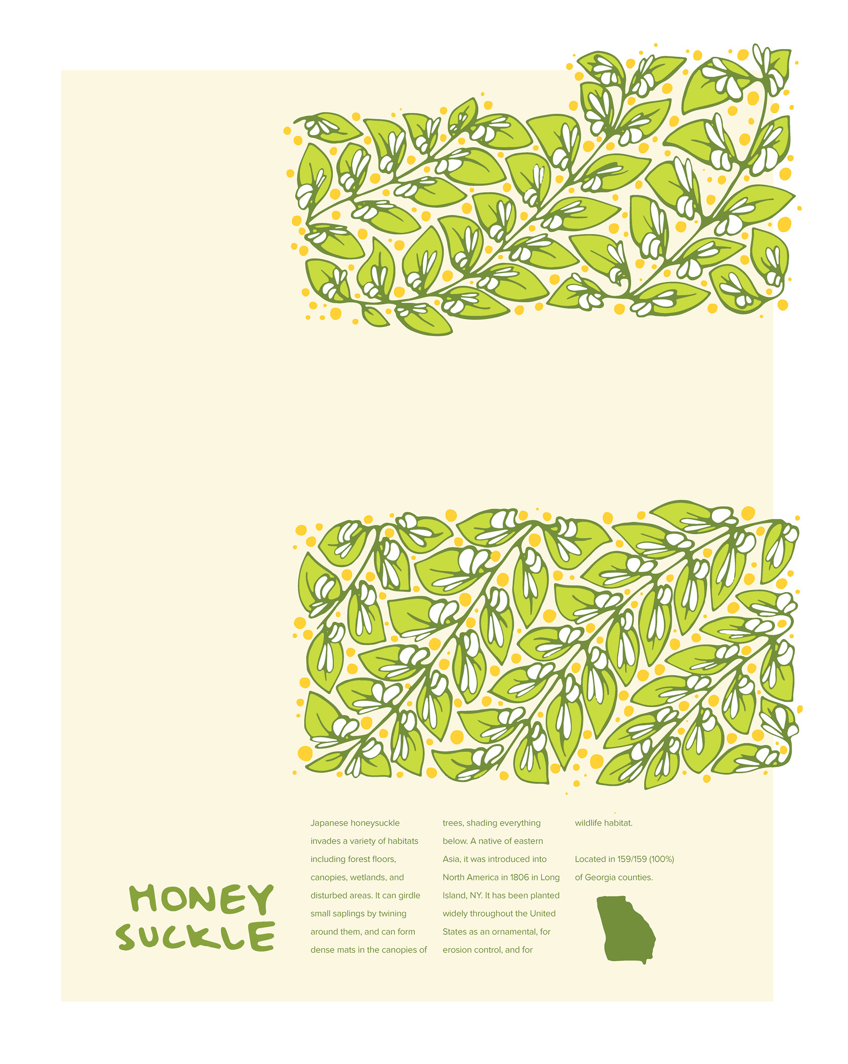 Invasive Poster: Honeysuckle