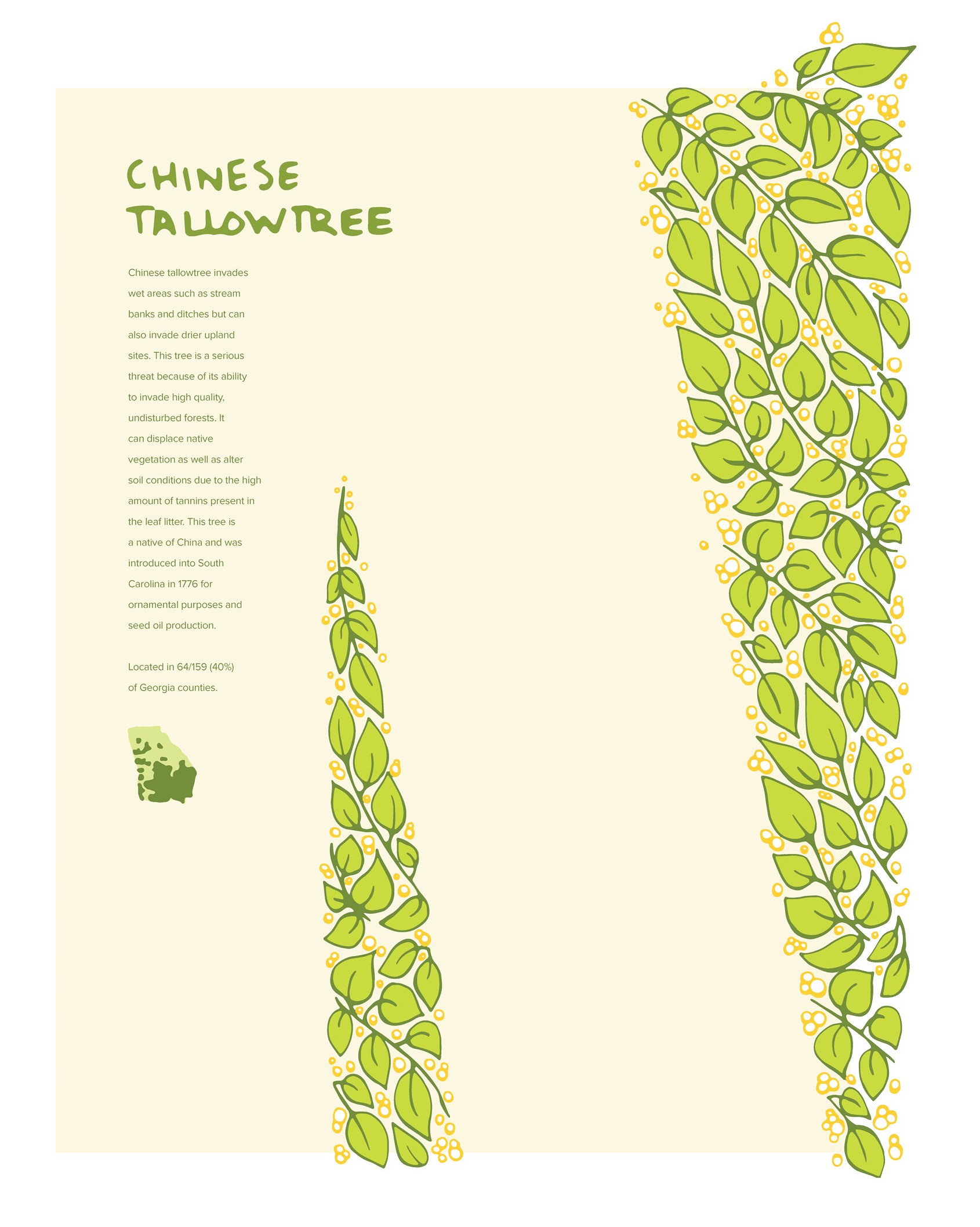 Invasive Poster: Chinese Tallowtree