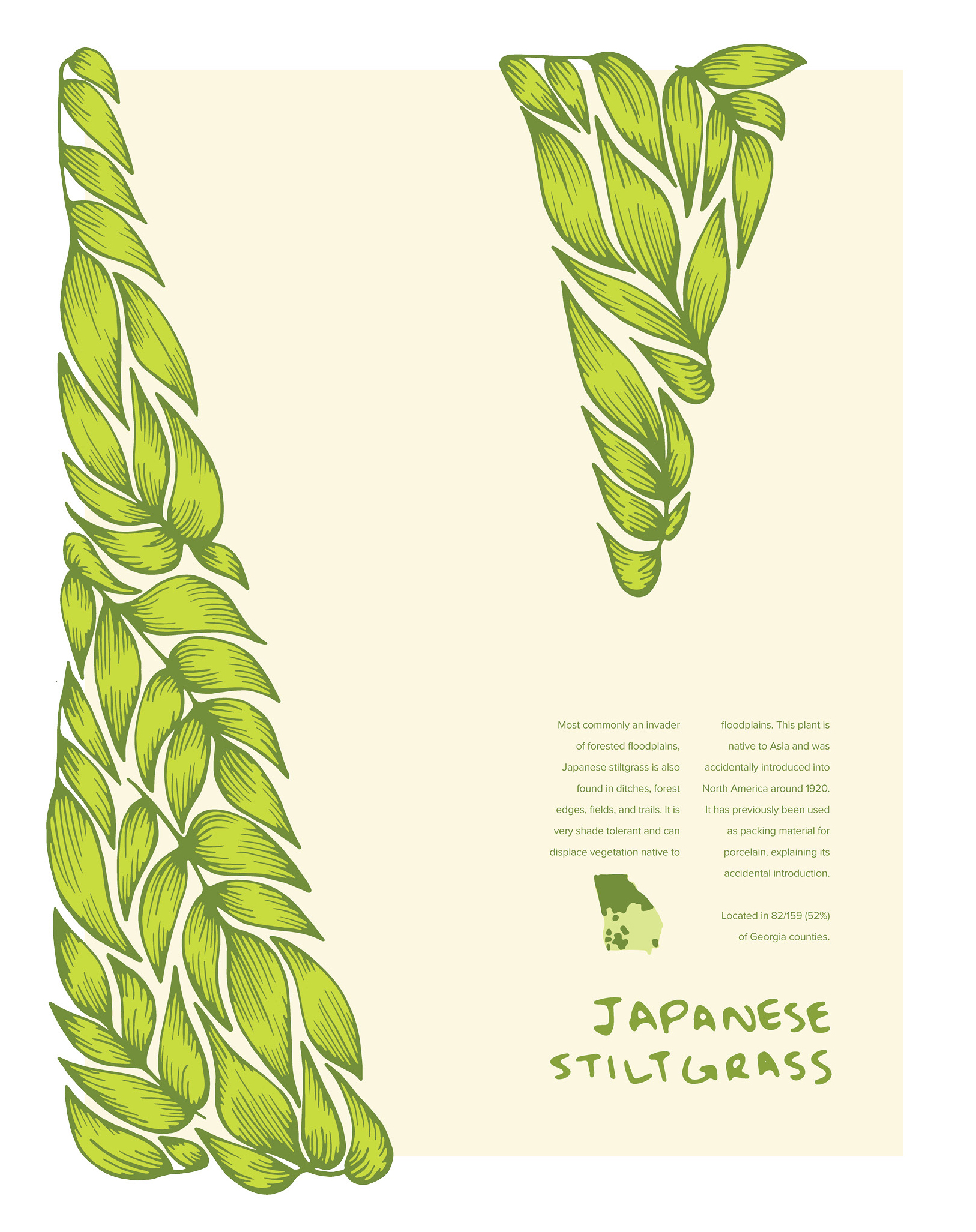 Invasive Poster: Japanese Stiltgrass