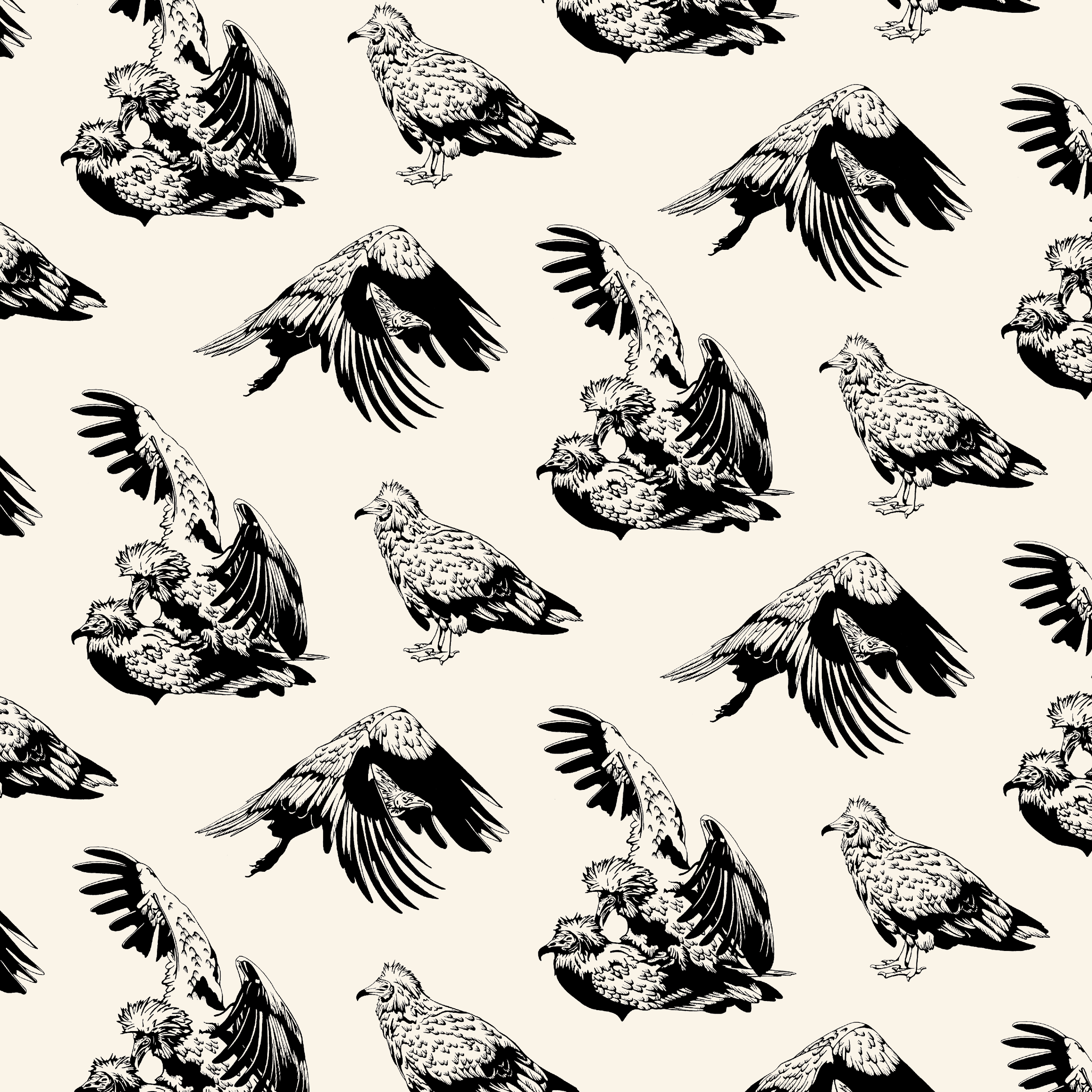 Egyptian Vulture Pattern