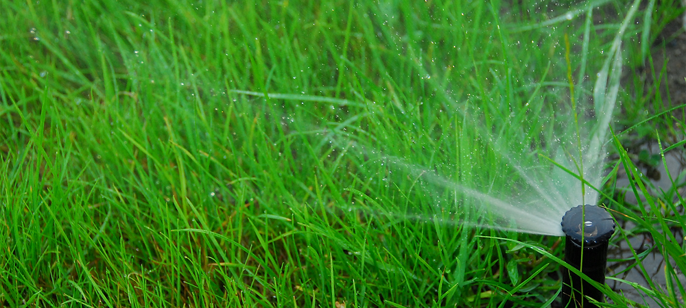 Automated sprinkler wetting beautifully green blades of grass, covered in dew drops.