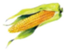 トウモロコシ.jpg