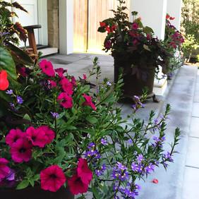 Vivid Summer Annuals