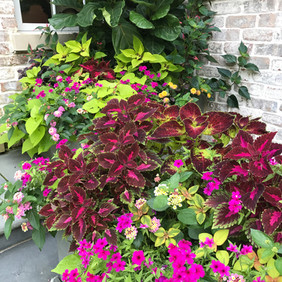 Annuals for Shade