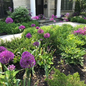 Late Spring Bulb Layer