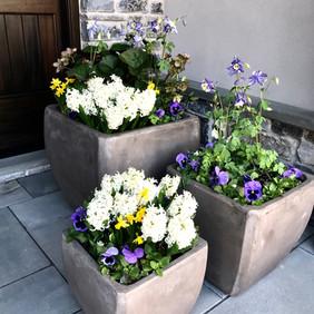 Trio of Spring Pots