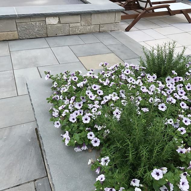 Edible Rosemary with Petunias