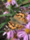 Pollinators Love Asters