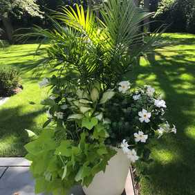 White and Green Annuals