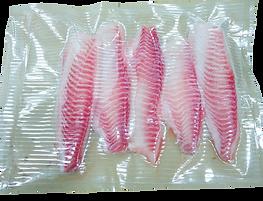 SAMPLE-fish