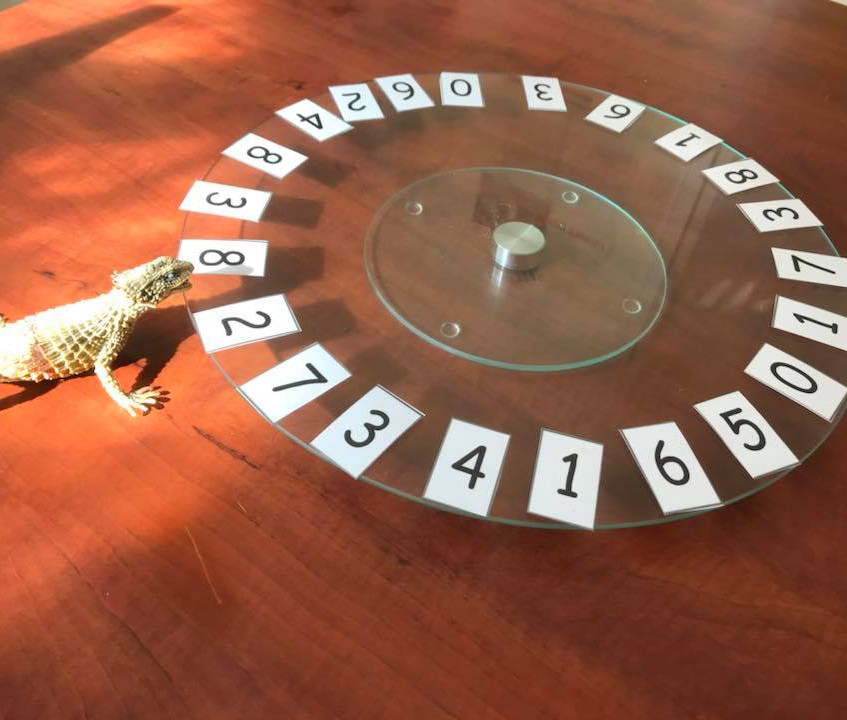 spinning wheel  - number recognition