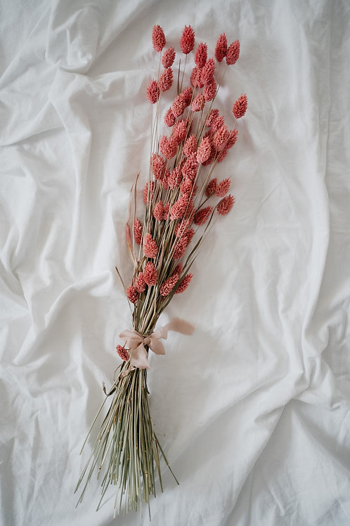Phalaris Rosa 70cm