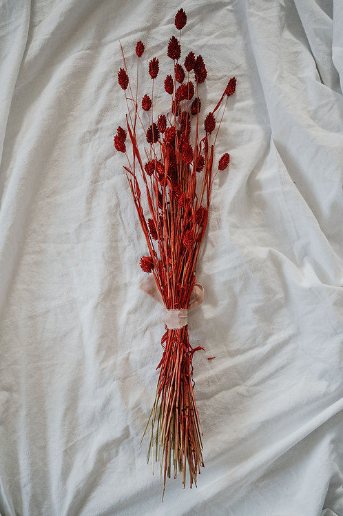 Phalaris rot 70 cm