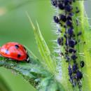 Plagas en primavera, 15 remedios ecológicos eficaces