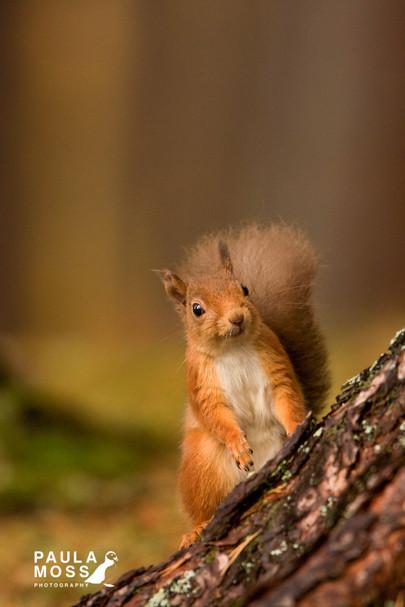 Squirrel C.jpg