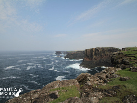A Wild Week of Shetland Photography