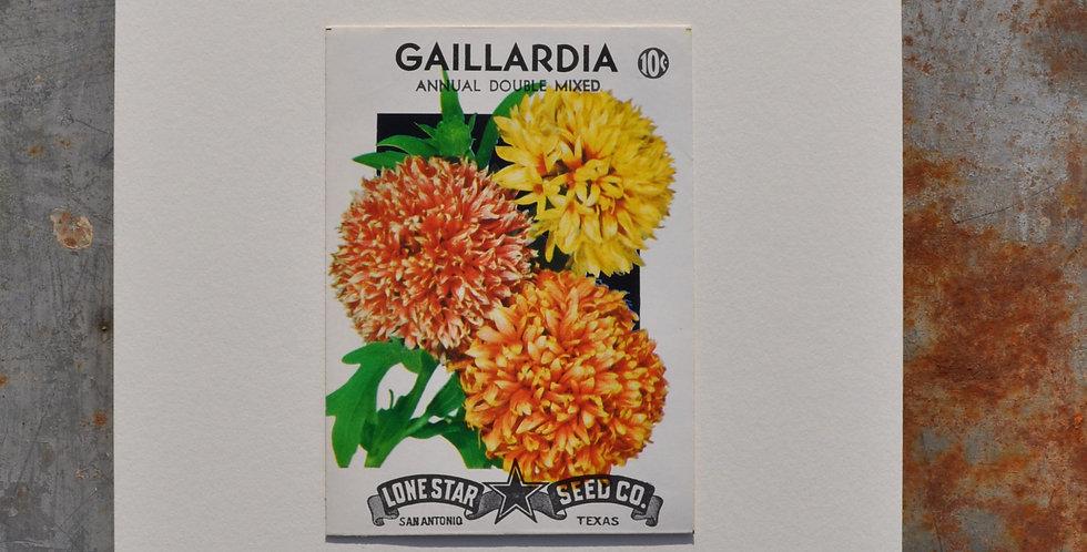 VINTAGE GAILLARDIA SEED PACKET