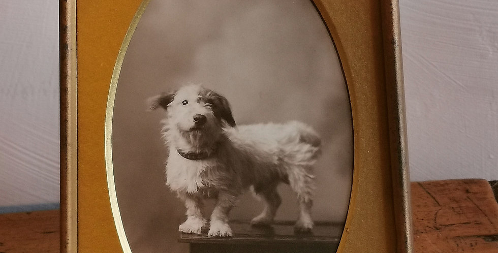 FRAMED PICTURE OF A DOG