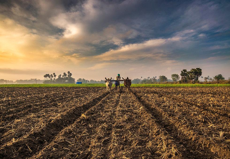 Farming_India_(202929337) (1).jpeg