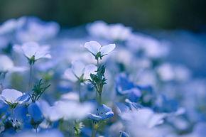 Hintergrund blau.jpg