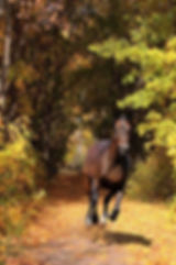 Equestrian Italy - Horseriding Trails in Rome &  Horseback riding vacations in Italy