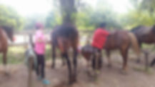 Blog for Equestrians - Horseback riding Trekking in Italy &  Horseback riding vacations in Rome