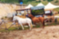 Equestrian Italy - horseRidingholidaysineurope #horsebackriding #ridingtrails #riding #horseridingvacations #horseridinginrome #horseholidaysinitaly #ranchvacations #italy #horse #horseridininitaly