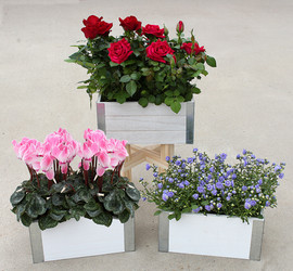 Blooming Mix in Double Wood Box.jpg