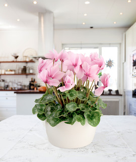 Kitchen 8in cyclamen bowl.jpg