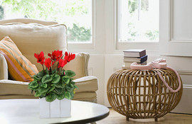 Cyclamen wood box.jpg