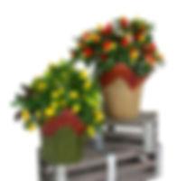 6in  Ornamental Pepper PCA-1.jpg