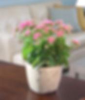 Kalanchoe ceramic.jpg
