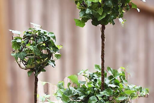 Ivy Topiary.jpg