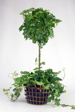 6in Topiary basket.jpg