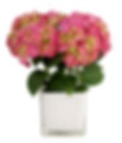 4in Hydrangea, Glass Pot-1.jpg
