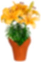 6in Orange Lily - kraft cover-.jpg