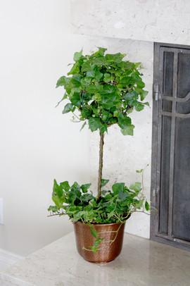 Ivy Topiary copper tin.jpg